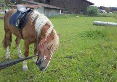 pferd_02.jpg