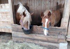 pferde-beim-fressen.jpg