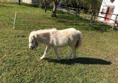 pony_03.jpg